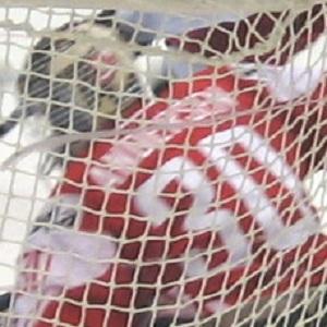 Hockey player Frederik Andersen - age: 31
