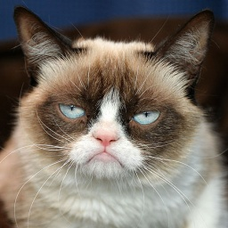 Internet celebrity Grumpy Cat - age: 8